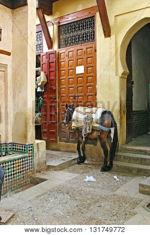 A brown pack horse waits for its owner outside a shop in the ancient medina Fes el Bali of Fez Morocco vertical