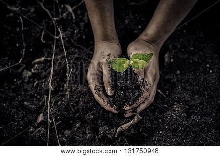 Seedling On Hand