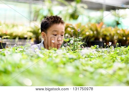 Boy looking to the little plant in the garden