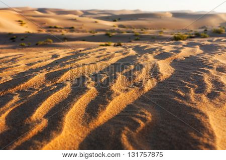 Early Morning Sun on Golden Sandy Ridges of Desert with Blurred Dunes and Shrubs in Background