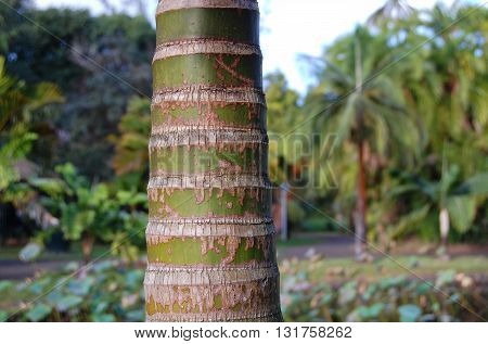 Palm trunk detail on blurred tropical background