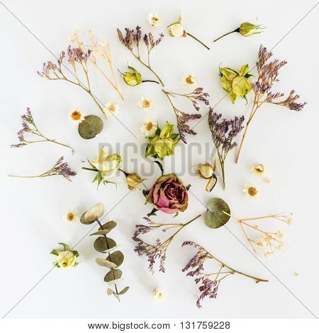 Dry flowers on white background. Flat lay