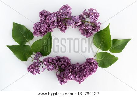 Lilac branch on a white background, top view