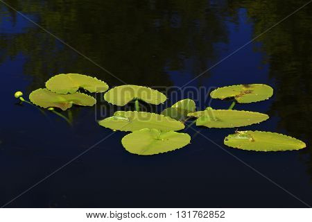 a picture of an exterior Pacific Northwest lilies pads and pond