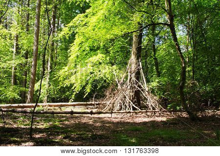 Building Camp Out Of Branches In The Woods