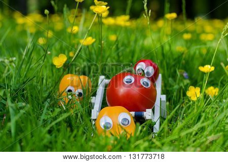 Funny vegetables with eyes in a summer meadow