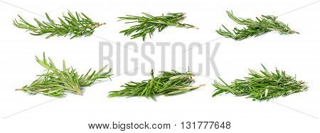 Collection Rosemary twigs isolated on white background.