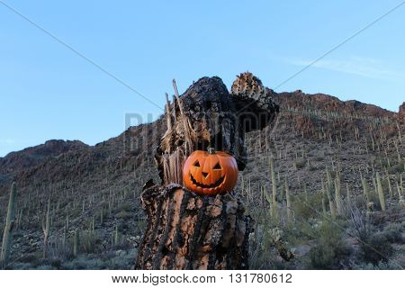 Halloween in the Desert with a Saguaro Skeleton and Jack o Lantern