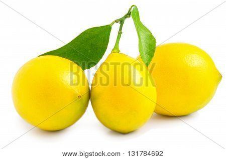 three lemons on a white background. Best quality studio photo.
