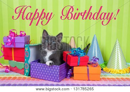 two month old gray and white tabby kitten peeking out of birthday present in a pile of brightly colored boxes with party hats bright green stripped background with Happy Birthday text