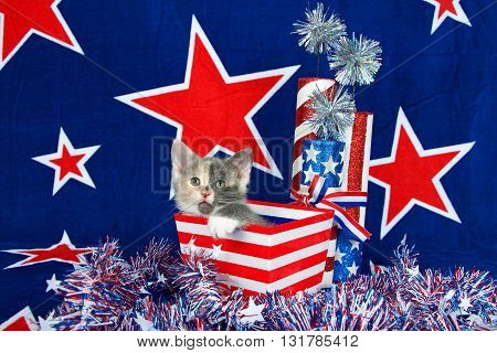 Patriotic calico kitten blue background with red stars outlined in white kitten sitting in red and white stripped box tinsel with white stars on table in front of her.