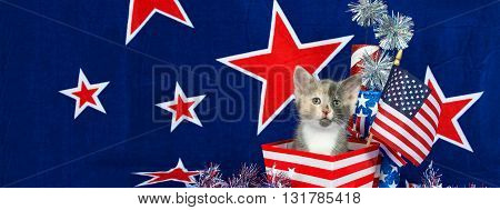 Patriotic calico kitten in red and white stripped box blue background red stars outlined in white American flag. Sized to fit a popular social media cover image placeholder