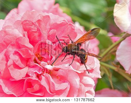 A large beetles sits on a flower