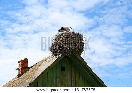 Stork in nest on roof of old rural house on sky background