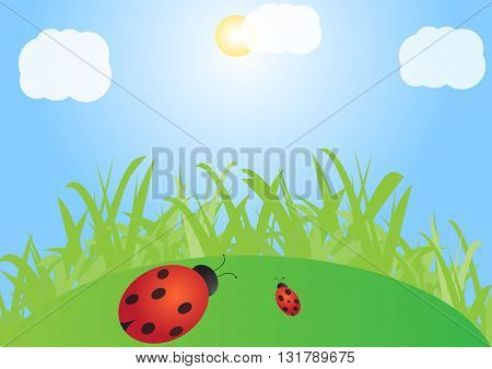 ladybugs on green meadow , sunny day