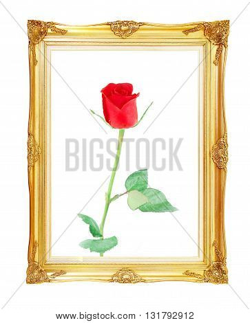 red rose on golden frame with empty for your picture photo image. beautiful vintage background