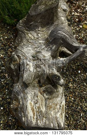 a picture of an exterior Pacific Northwest driftwood log