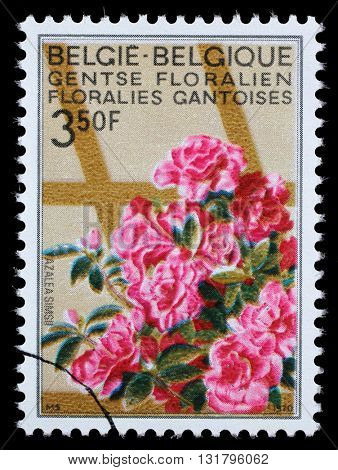 ZAGREB, CROATIA - JULY 03: A stamp printed in Belgium from the Ghent Flower Show issue shows Azaleas, circa 1970, on July 03, 2014, Zagreb, Croatia