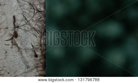 abstract, protection, light, backgrounds, indistinct, brown color, green background, drawing chaotic, thin strips in different directions, main background greenish