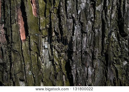 bark of very old tree in the gardens