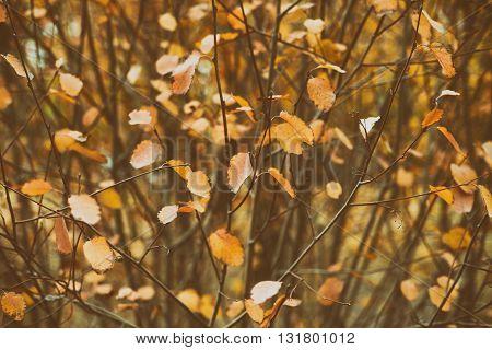 Autumn leaves on bush. Retro film style