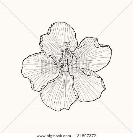 Hibiscus flower top view line pattern. Coloring book page for adult. Can use for wedding invitation card ticket branding boutique logo.