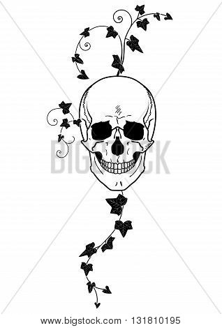 vector illustration of skull and ivy in black and white
