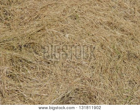 Hay straw texture straw, texture, hay, background