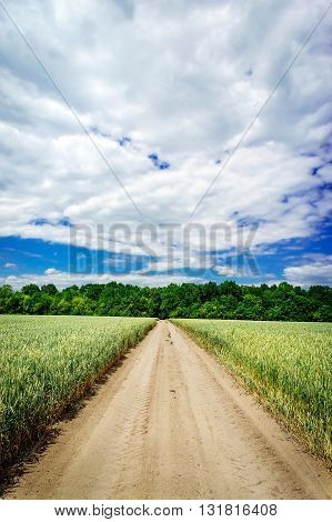Calm view of a green wheat field.