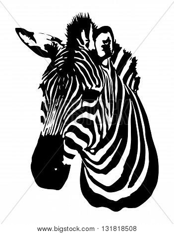 Zebra head. Vector image of an zebra head on white background