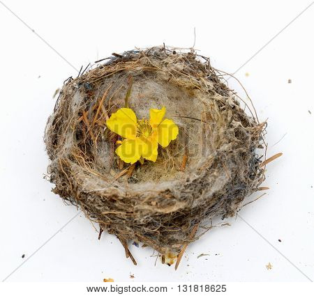 picture of a yellow forest flower in a bird nest