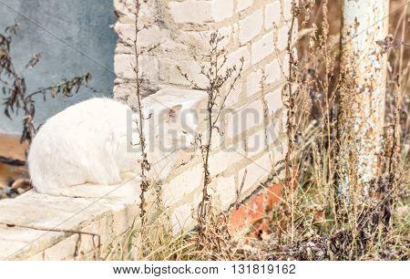Adult nice wild white cat at autumn ruines