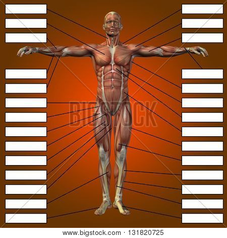 3D illsutration of a concept or conceptual male or human anatomy, a man with muscles and textbox on red gradient background