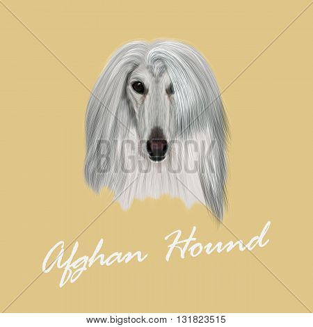 Vector Illustrated Portrait of Afghan Hound dog. Beautiful silver coat face of domestic dog on beige background.
