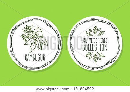 Ayurvedic Herb Collection. Handdrawn Illustration - Health and Nature Set. Natural Supplements. Ayurvedic Herb Label with Sambucus