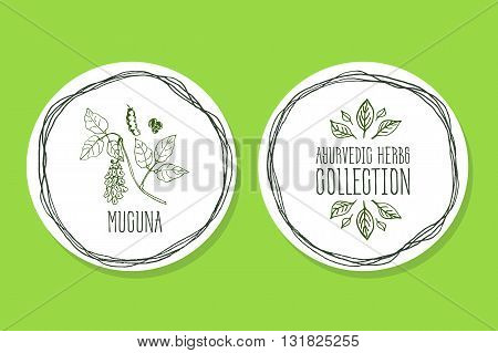 Ayurvedic Herb Collection. Handdrawn Illustration - Health and Nature Set. Natural Supplements. Ayurvedic Herb Label with Mucuna
