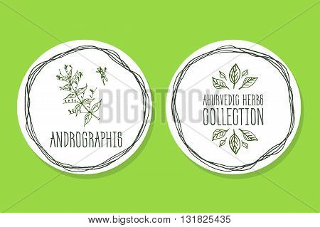 Ayurvedic Herb Collection. Handdrawn Illustration - Health and Nature Set. Natural Supplements. Ayurvedic Herb Label with Andrographis