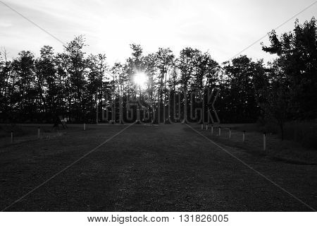 sun behind the trees , black and white art photo