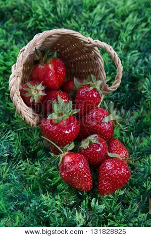 Delicious Strawberries In Small Basket Under Green Grass Background