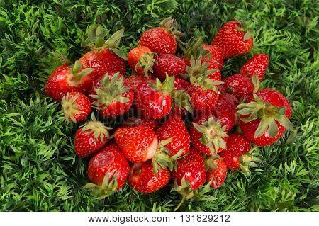 a Fresh Strawberry Background on grass background