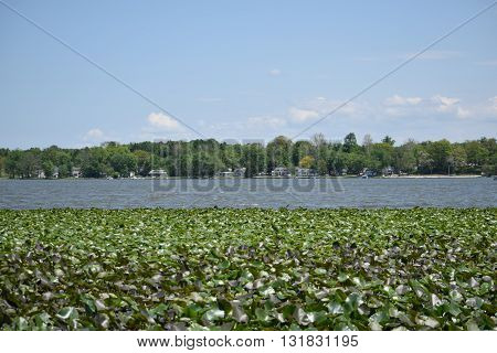 the shore line of a lake that is lined with lily pads.