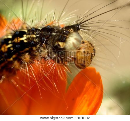 Caterpillar...(2)