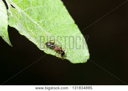 Ant On The Leaves