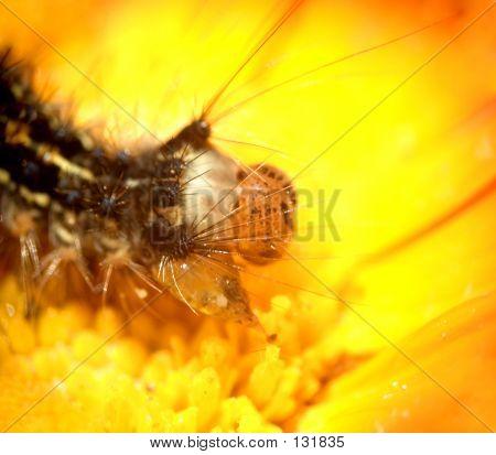 Caterpillar...(5)