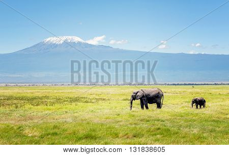 Elephant mother with calf in Kenya Africa