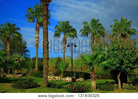 the Garden Palm Trees. Summer. Blue Sky.