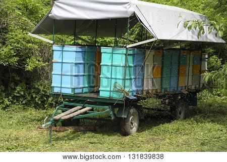 Colorful mobile transport car for beehive whith roof