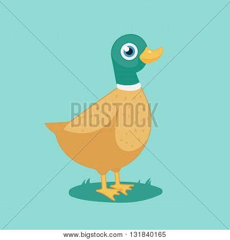 cartoon duck, funny bird, farm.Vector Illustration of Duck.isolated on white background.