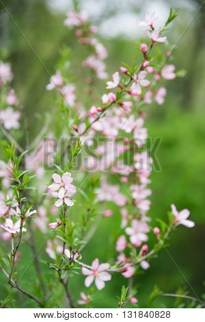Bright flovers in garden. Selective soft focuse and boke on background