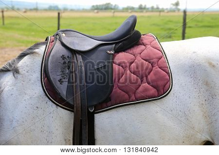 Sport saddle with stirrups on a back of a horse. Leather saddle for equestrian sport on a back of a horse